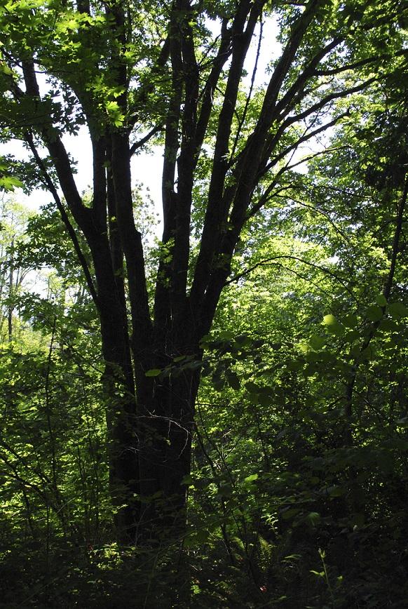 The Strange Habits of SomeTrees