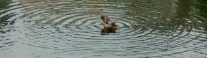 duck-circle