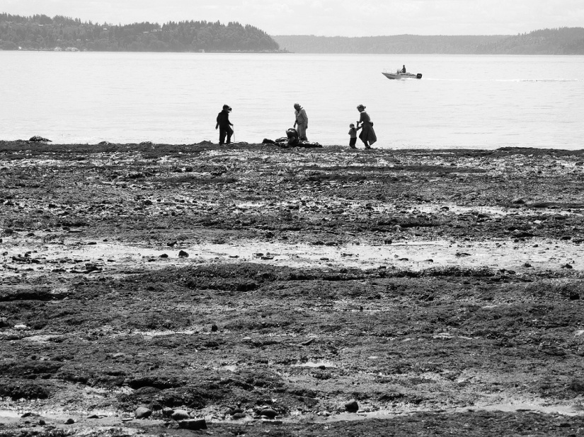 Low Tide Silhouettes