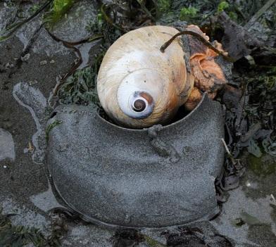 mon snail